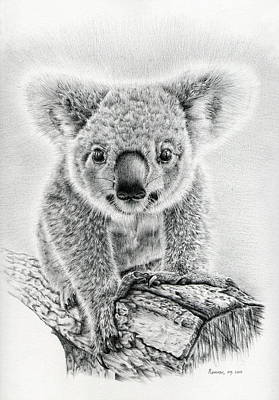 Animals Drawings - Koala Oxley Twinkles by Casey