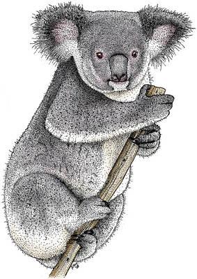 Photograph - Koala by Roger Hall
