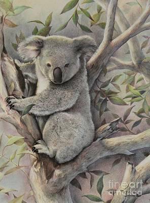 Marsupial Painting - Koala's Retreat by Martin Lacasse