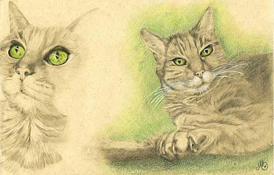House Cats Drawing - Kobi Study by Marcianna Howard