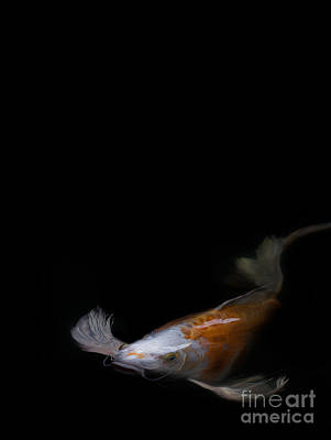 Photograph - Koi 1 by Rebecca Cozart