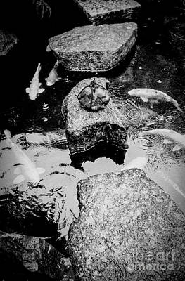 Photograph - Koi Around The Old Stone Path by Dean Harte