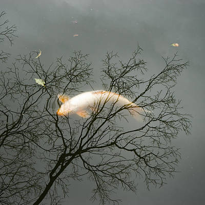 Photograph - Koi At The Kyu Yasuda Garden by For Ninety One Days