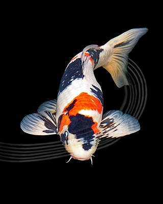 Photograph - Koi Carp Abstract by Gill Billington