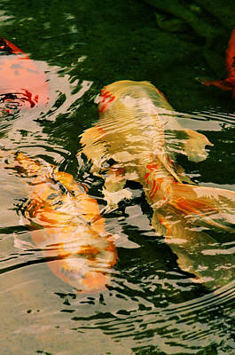 Photograph - Koi Crossing by Nadalyn Larsen