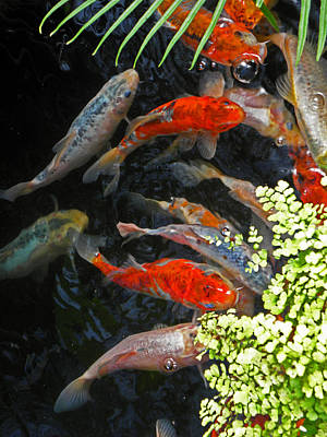 Photograph - Koi Fish I by Elizabeth Hoskinson
