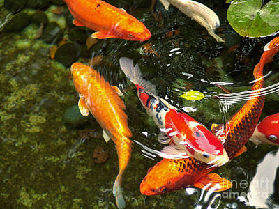Koi Fish Japan Art Print by John Swartz