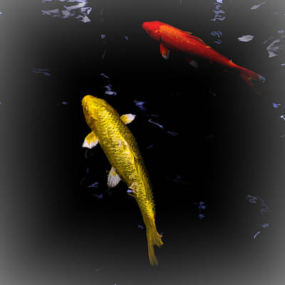 Photograph - Koi Fish Swimming by Bill Barber