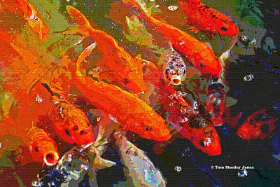 Koi Digital Art - Koi Fish  by Tom Janca