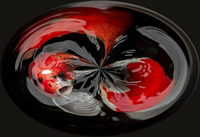 Photograph - Koi In A Circle by Jean Noren