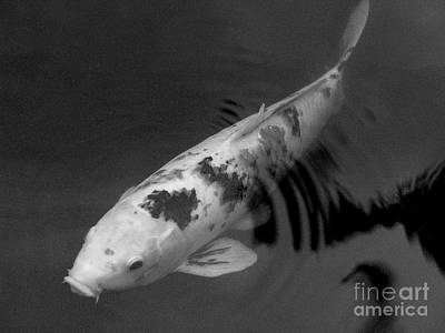 Koi In Black And White Art Print by Mary Deal