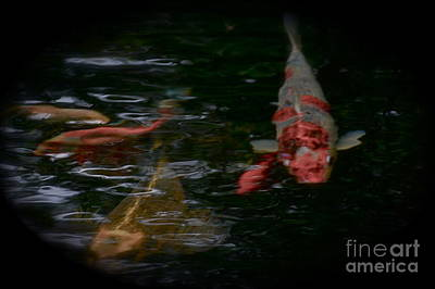 Photograph - Koi In Shady Pond by Tim Good