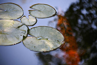 Pond Photograph - Koi  by Mark Weaver