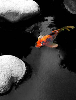 Koi Fish Photograph - Koi by Meagan Johnson