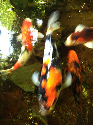 Photograph - Koi Motion by Sara Stevenson