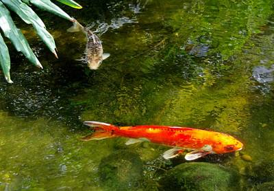 Photograph - Koi Pair by Phyllis Spoor