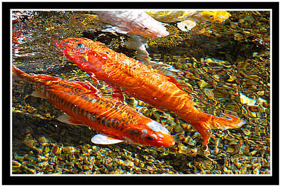 Photograph - Koi Pals by Claudia Ellis