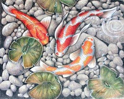 Lilly Pond Drawing - Koi Pond by Kat Ewing