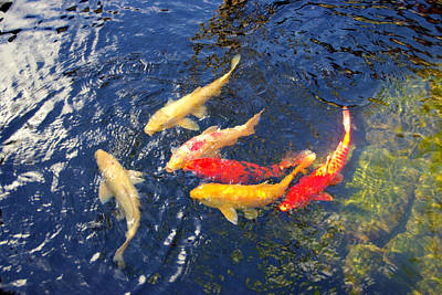 Photograph - Koi Pond by Marilyn Wilson