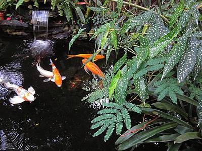 Butterfly Koi Photograph - Koi Pond by MTBobbins Photography