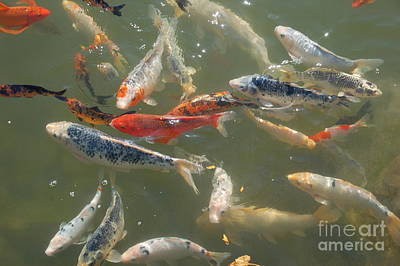 Photograph - KOI by Randy J Heath