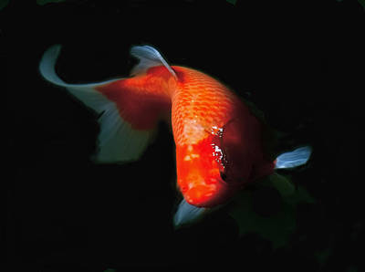 Photograph - Koi by Rona Black