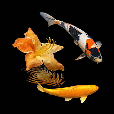 Photograph - Koi With Azalea Ripples Square by Gill Billington