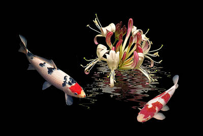 Photograph - Koi With Honeysuckle Reflections by Gill Billington