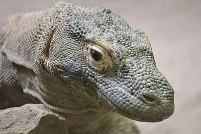 Photograph - Komodo Dragon by Diane Alexander