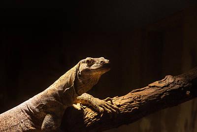 Photograph - Komodo Dragon Poising by Douglas Barnett