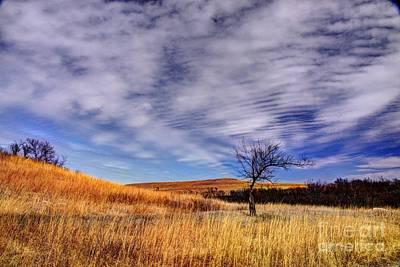 Konza Prairie Photograph - Bent Tree On The Konza Prairie by Jean Hutchison