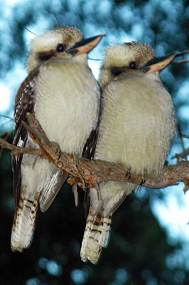 Beechworth Photograph - Kooka Duet by Glen Johnson