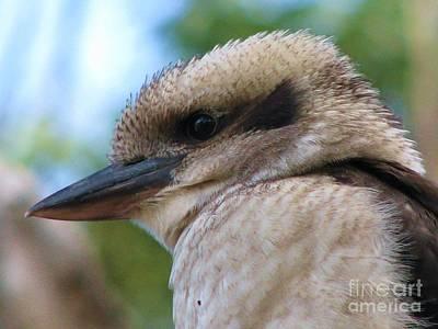 Photograph - Kookaburra by Michele Penner
