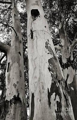 Photograph - Kookaburras Happy Tree by Lee Craig