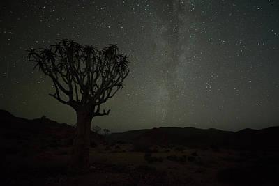 Kookerboom Tree With Milky Way Art Print by Robert Postma