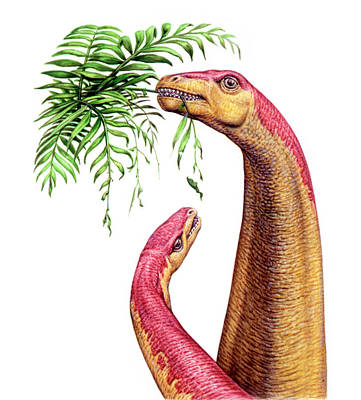 Paleozoology Photograph - Kotasaurus Dinosaurs by Deagostini/uig