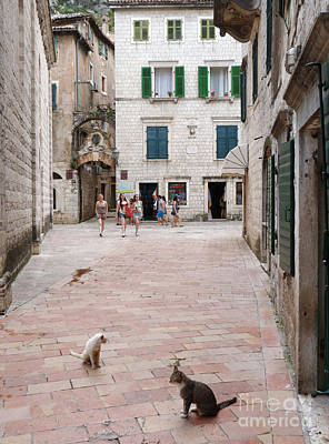 Photograph - Kotor Old Town Cats by Phil Banks