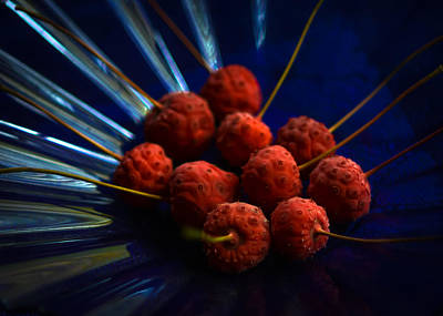 Photograph - Kousa Dogwood Fruit 3 by Ronda Broatch