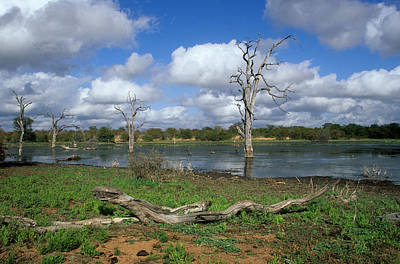 Photograph - Kruger National Park by Nigel Dennis