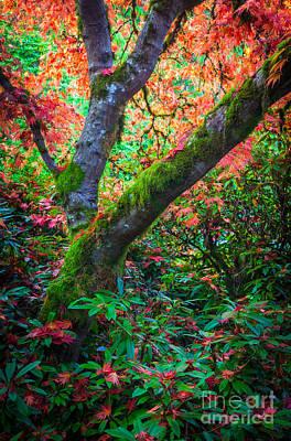 Fall Foliage Photograph - Kubota Gardens Foliage by Inge Johnsson