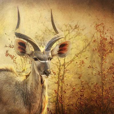 Kudo Art Print by Kim Andelkovic