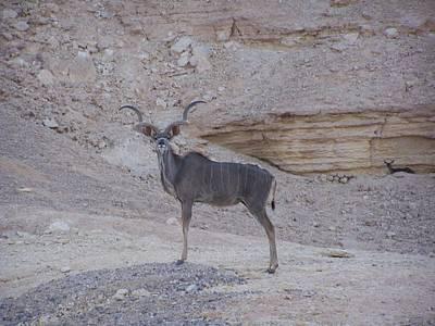Kudu King Art Print