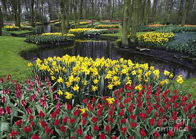 Photograph - Kukenhoff Tulip Gardens by Craig Lovell