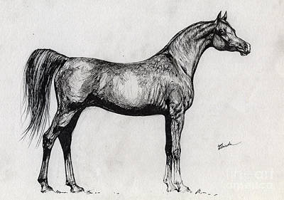 Kwestura Polish Arabian Horse Drawing Art Print