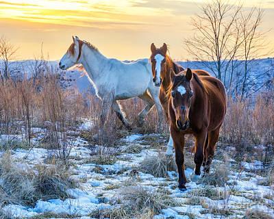 Ky Wild Horses Art Print