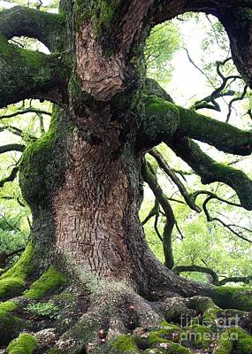 Tree Roots Photograph - Kyoto Temple Tree by Carol Groenen