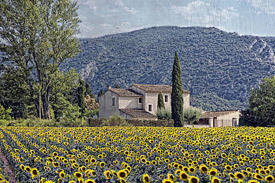 Sunflowers Royalty-Free and Rights-Managed Images - La Belle Saison Provencal by Joachim G Pinkawa