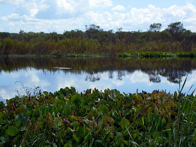 Photograph - La Chua Pond by Sheri McLeroy