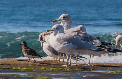 Photograph - La Jolla Birds by Dusty Wynne