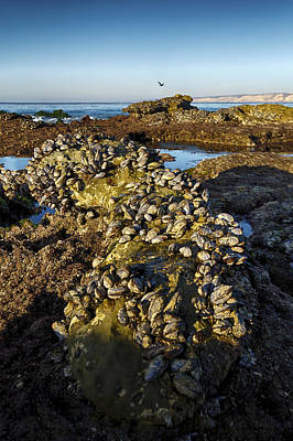 Photograph - La Jolla Clam Bake 2 by Scott Campbell